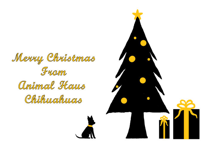 Happy Holidays from Animal Haus Chihuahuas